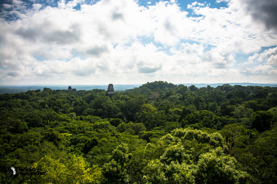 Tikal ruin view from Temple IV Guatemala backpacking itinerary