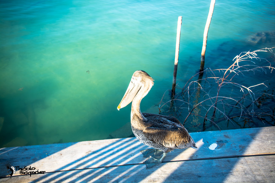 Caye Caulker snorkeling trip Belize backpacking itinerary