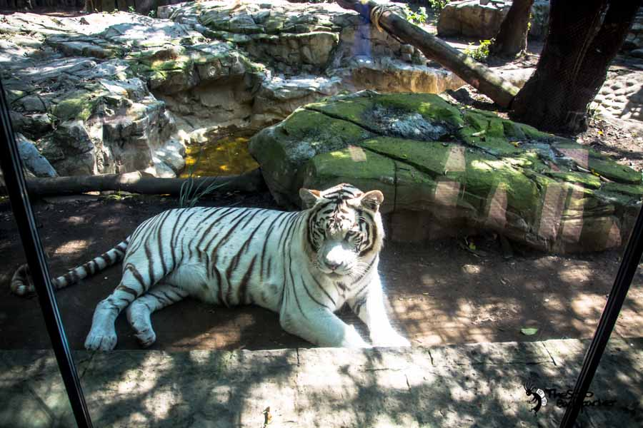 the Zoo at Chapultepec park in Mexico city Mexico backpacking Itinerary